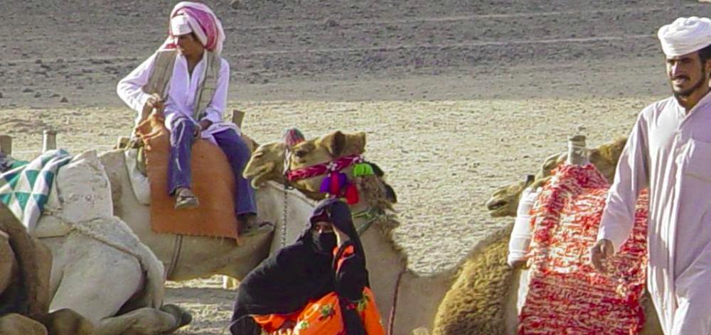 Extended safari Sahara Park from Hurghada - halfday trip