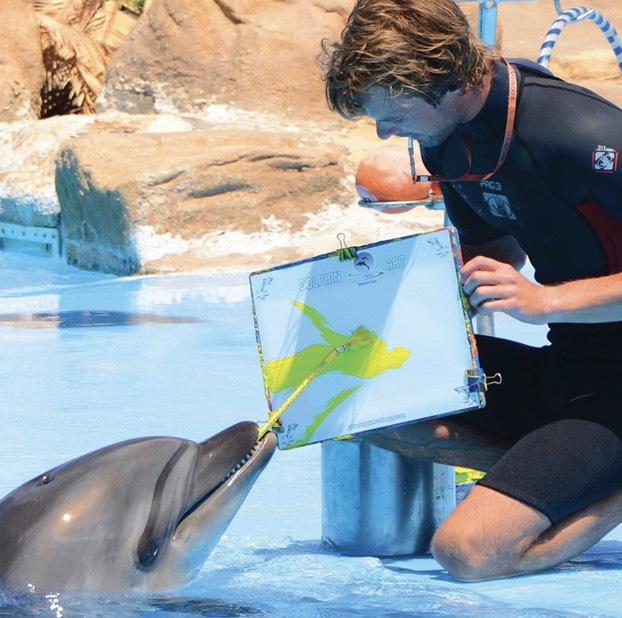 Dolphinarium (Dolphin Show) in Hurghada