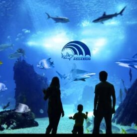 Grand Aquarium in Hurghada