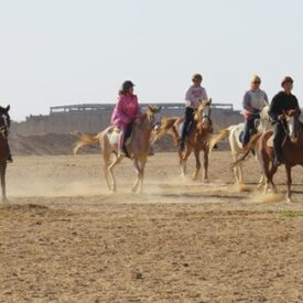 Horse riding to desert from Hurghada