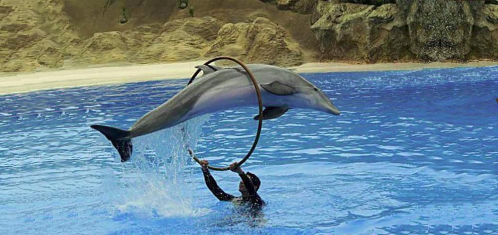 Dolphinarium in Hurghada