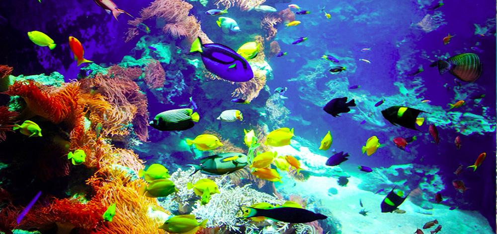 Corral protected area in Hurghada - sea trip